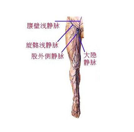大隐静脉解剖示意图