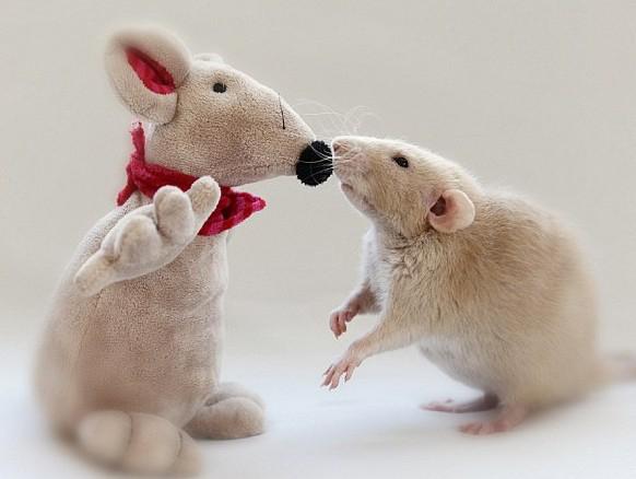 荷兰摄影师埃伦(Ellen Van Deelen)给3只宠物鼠拍摄了一套写真集。照片中的老鼠们模仿人类的样子做珠算、织毛衣、与家人一起喝茶。演绎着现实版的森林家族。在其中一张照片中,一只宠物鼠打开一辆大众甲壳虫汽车的车门,准备上车,而另一张照片中的一只宠物鼠则推着一