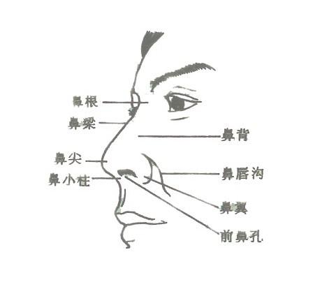 人体外鼻解剖示意图