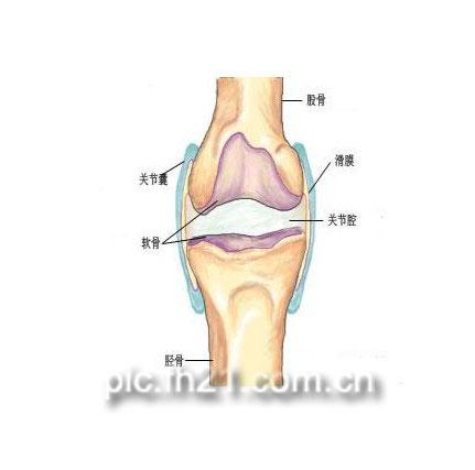 膝关节骨质增生解剖图