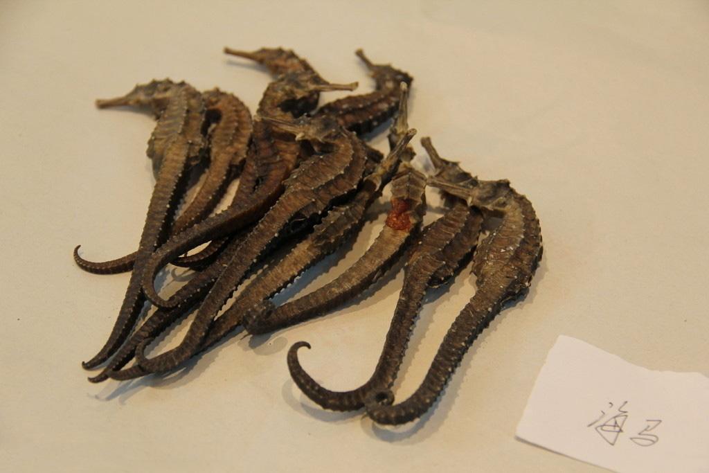 飞华首页 图片 药材 正文  海马,鱼纲,海龙目,海马属动物的总称,属于