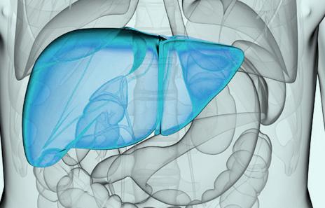 脂肪肝治疗时间什么时候最佳