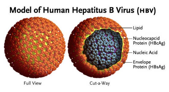 预防肝炎传染的方法