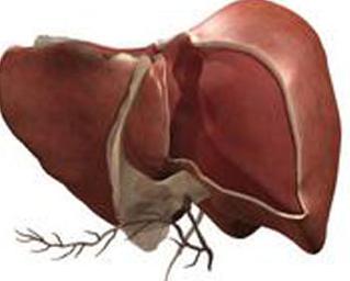 得了重症肝炎传染吗