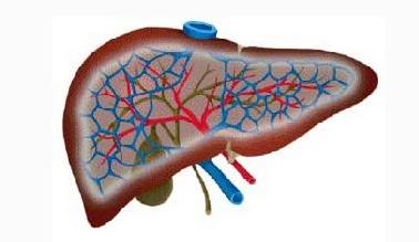 重症肝炎患者的护理措施有哪些