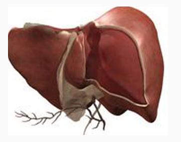 重症肝炎是否传染