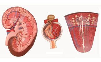 尿毒症患儿的饮食护理措施