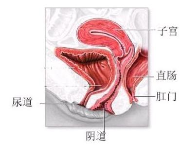 针对性治疗霉菌性阴道炎的药有哪些