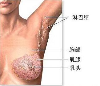 乳腺增生切除多少钱