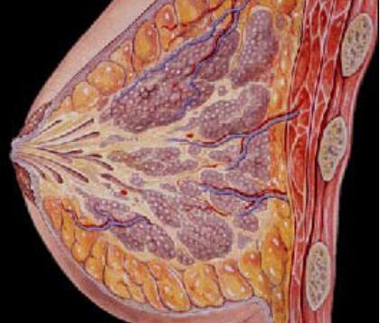 价格合理的乳腺增生治疗方法有哪些