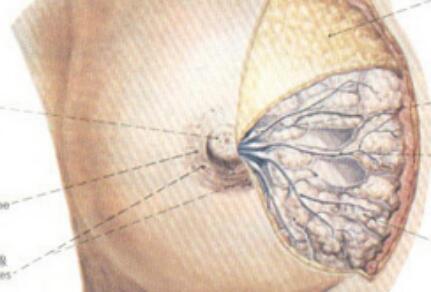 乳腺增生癌变的症状