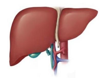 肝癌检查什么项目