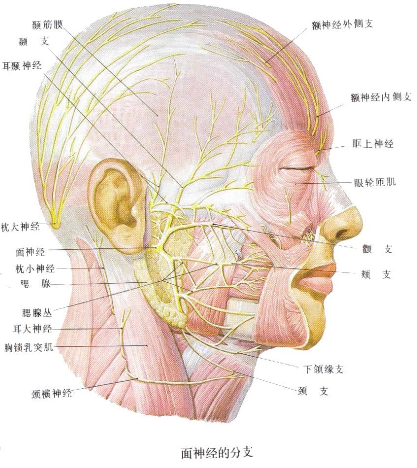 三叉神经痛,这组穴位可联用  三叉神经痛穴位按摩