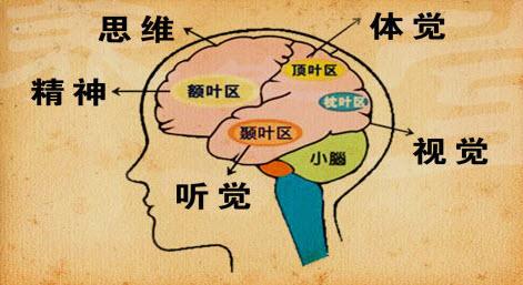 介绍癫痫病因都有哪些